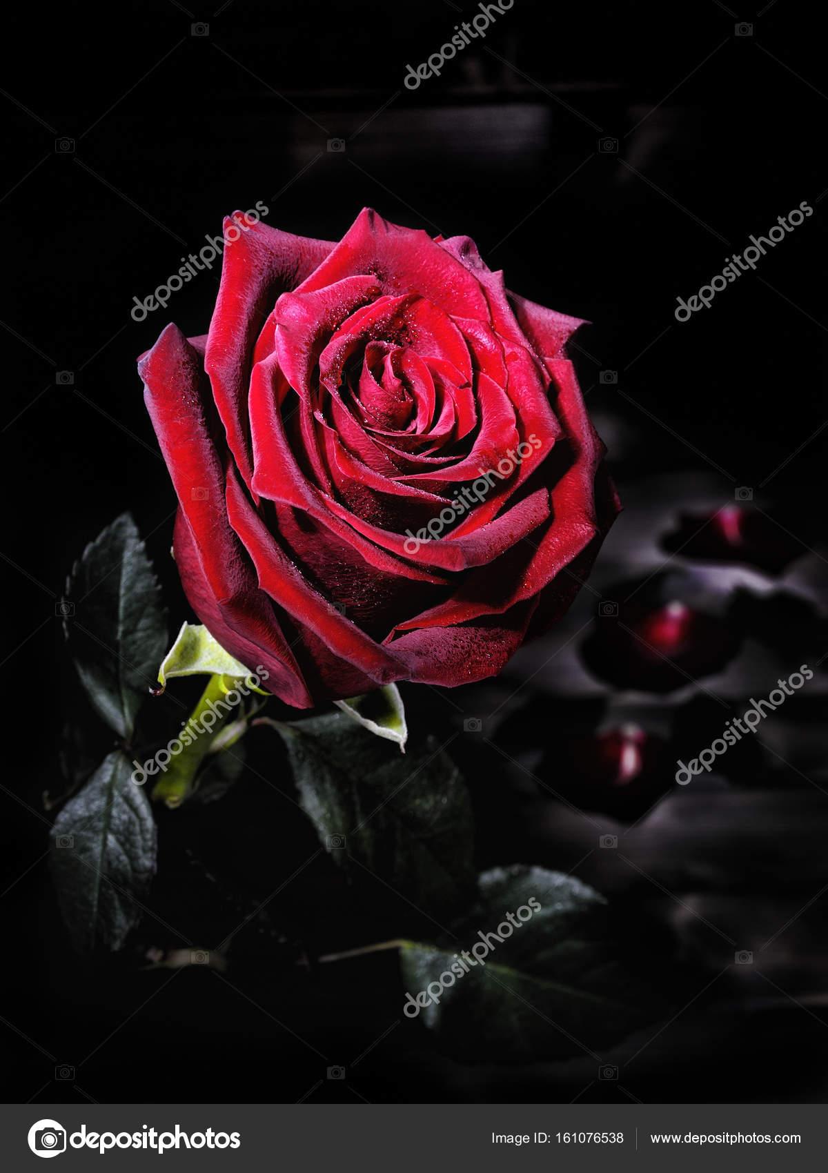 Primo Piano Di Una Rosa Rossa Su Un Tavolo In Legno Invecchiato