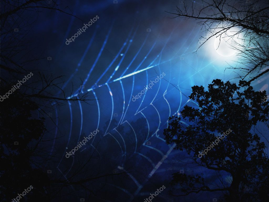 spider web and dark forest with frog