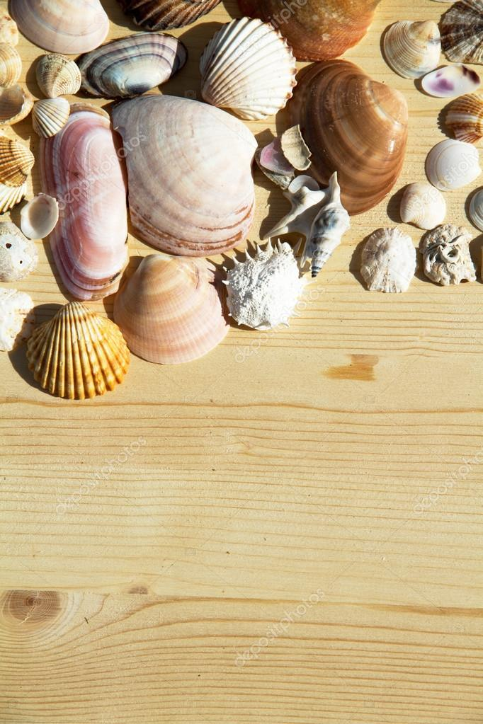 Fondo de marco de concha — Foto de stock © tizianella #127533912