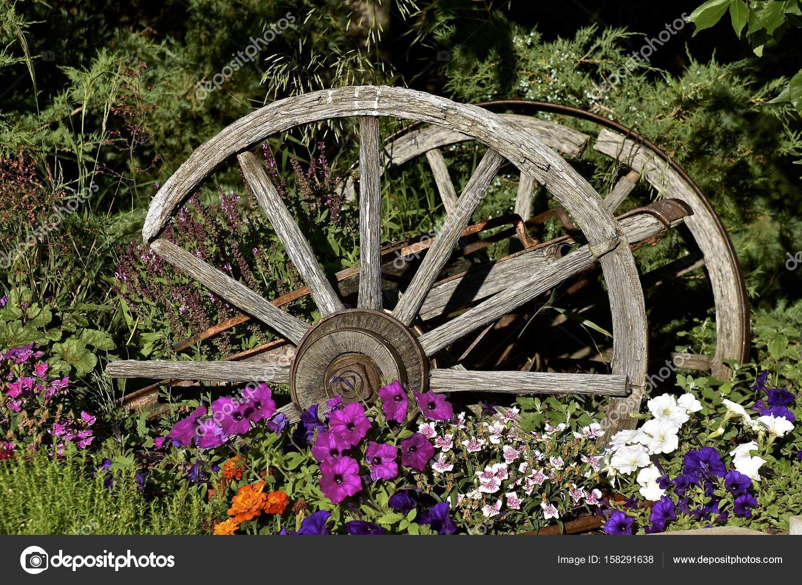 Old Wagon Wheels In A Flower Garden Stock Photo Image By C Fiskness 158291638