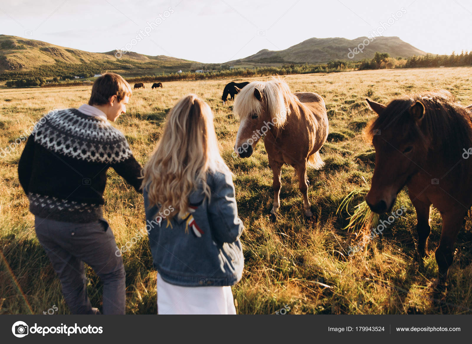 Young Couple Feeding Pretty Horses Field Stock Photo C Tytbil88 179943524