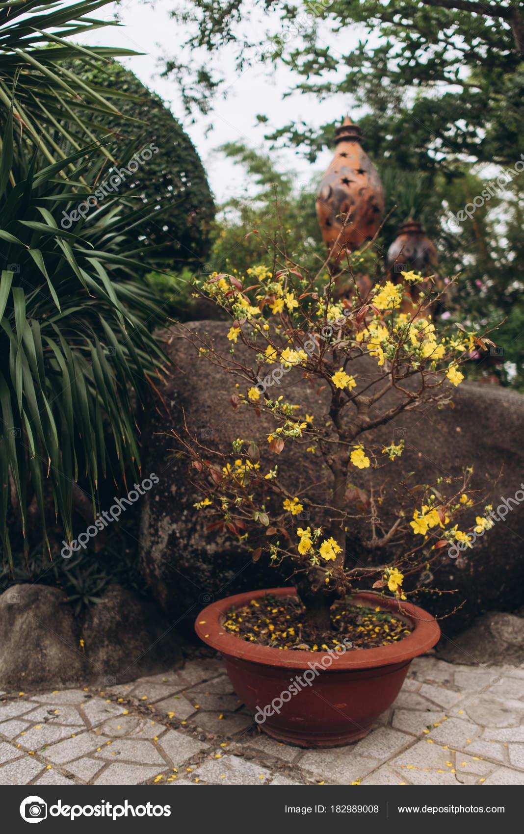 Całkiem żółte Kwiaty Doniczki Ogrodzie Tle Kamienia Rośliny