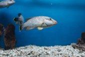 Exotické ryby koupání nedaleko korály v akváriu