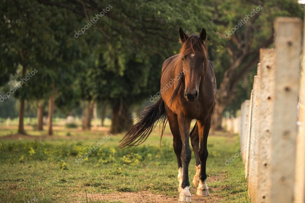 beautiful horse walking