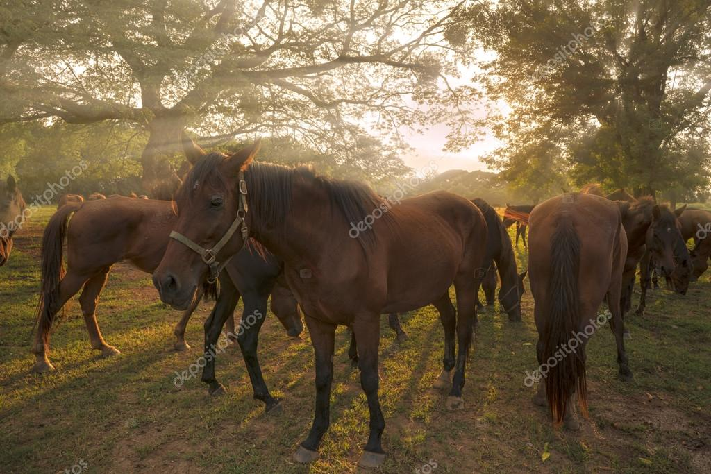 Horses in meadow at sunset