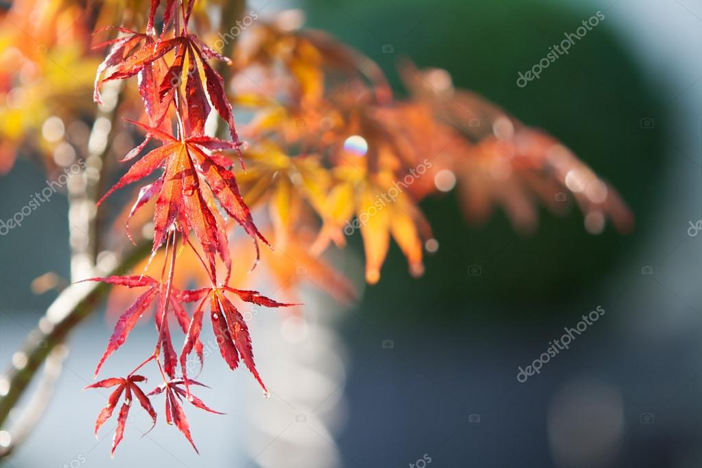 Autumn colorful leaves background with rain drops