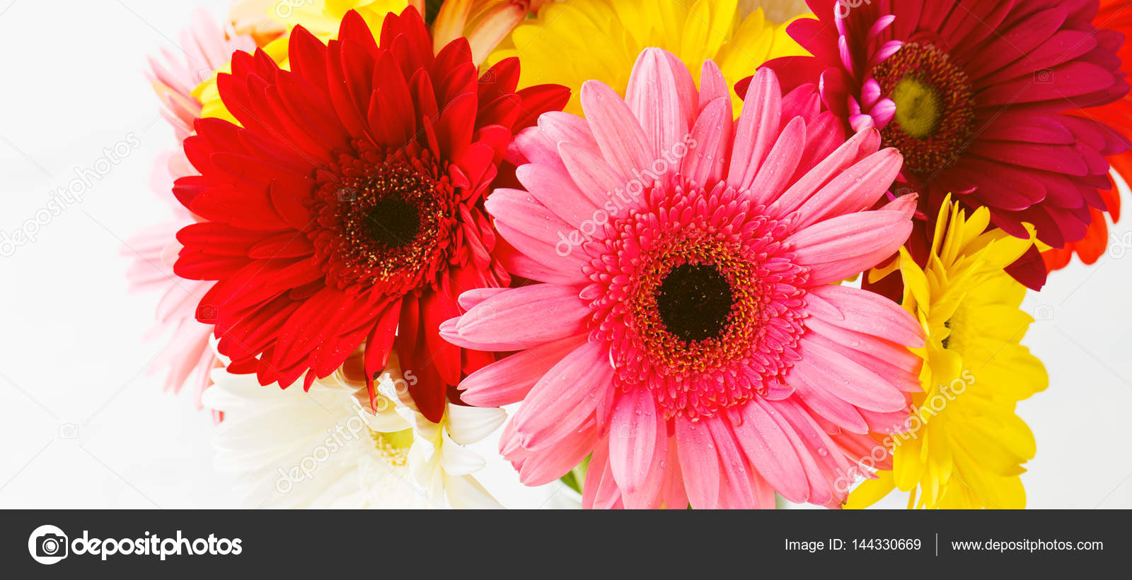 Colorful Gerbera Flowers On White Wooden Background Stock Photo
