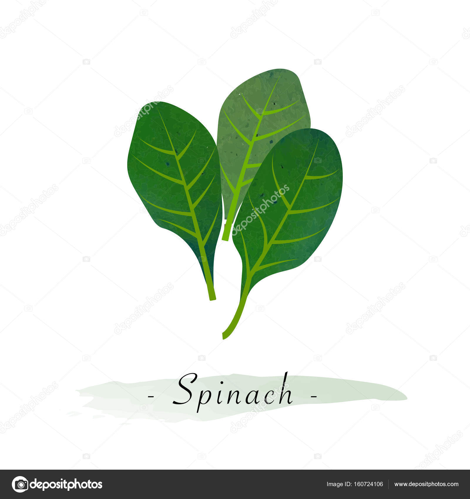 Colorful Watercolor Texture Vector Healthy Vegetable Spinach