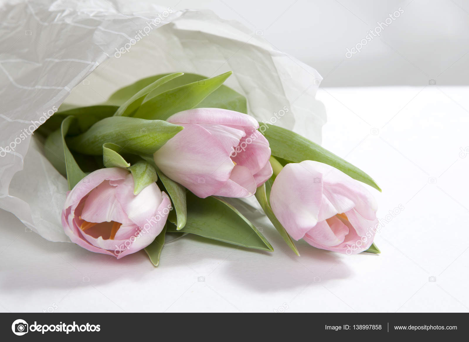 The Anniversary pink tulip flower bouquet wrapped in white paper ...