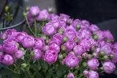 Kytice fialová poupata pro svatební oslavy