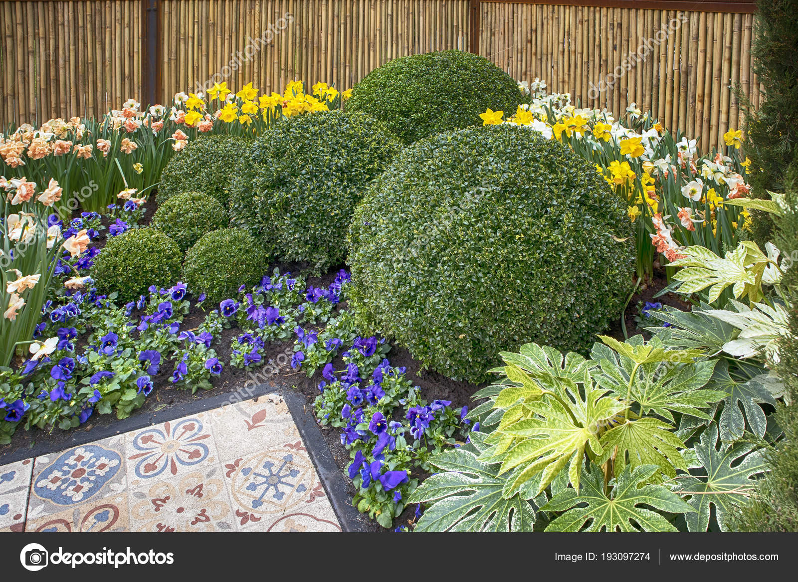 the Round bowls of boxwood as an example of landscape design in the on