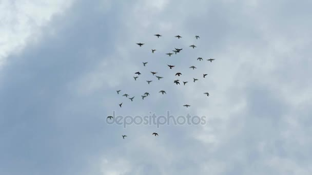 Flock of pigeons flying in cloudy sky. Slow motion shot