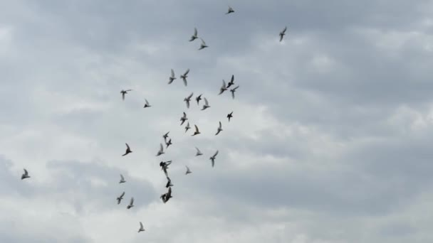 Flight of pegions circles in cloudy sky. Slow motion shot