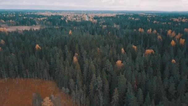 Jehličnaté stromy a zlaté břízy v podzimním lese. Letecký snímek