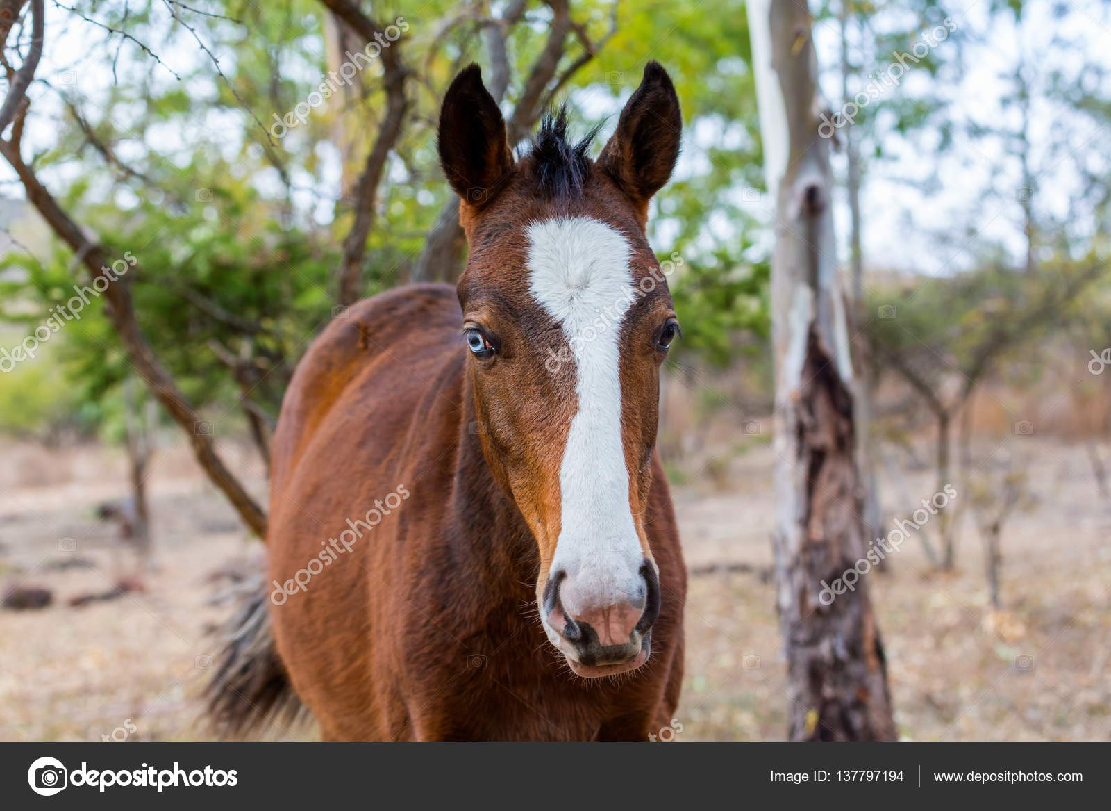 Mustang Horse Roaming Wild In Mexico Stock Photo C Campbell2 Sympatico Ca 137797194