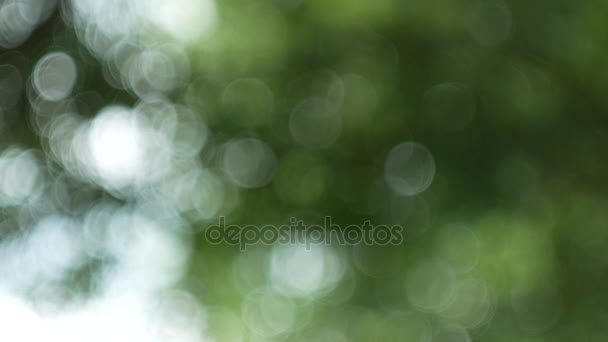 green nature abstract background from leaf wind blows in forest ,green bokeh out of focus background from nature forest
