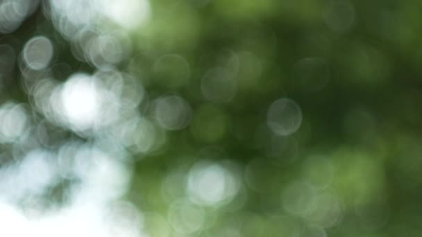 Zelená příroda abstraktní pozadí z listové vítr fouká v lese, zelené bokeh mimo zaměření pozadí od přírody lesů