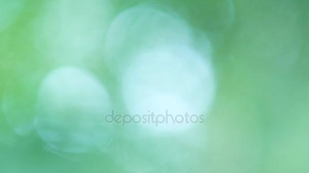Zelená příroda abstraktní pozadí od listů s sun ray v lese, zelené bokeh mimo zaměření pozadí od přírody lesů