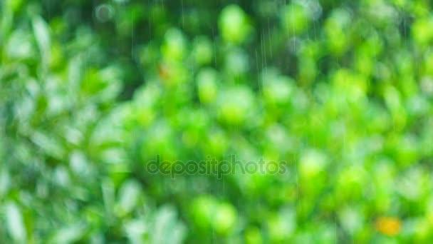 velký liják v korunách stromů deštného pralesa rozmazané pozadí