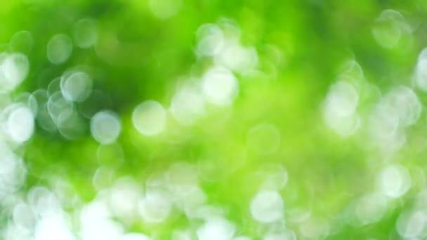 Krásné zelené přírody pozadí, slunce prosvítající mezi listy stromů, přírodní pozadí