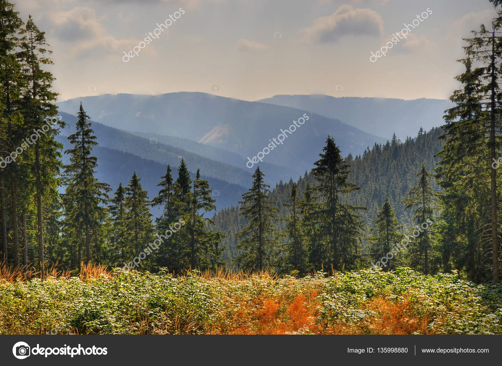 Trees Forests Austria Stock Photo C 01010011portfoliolab 135998880