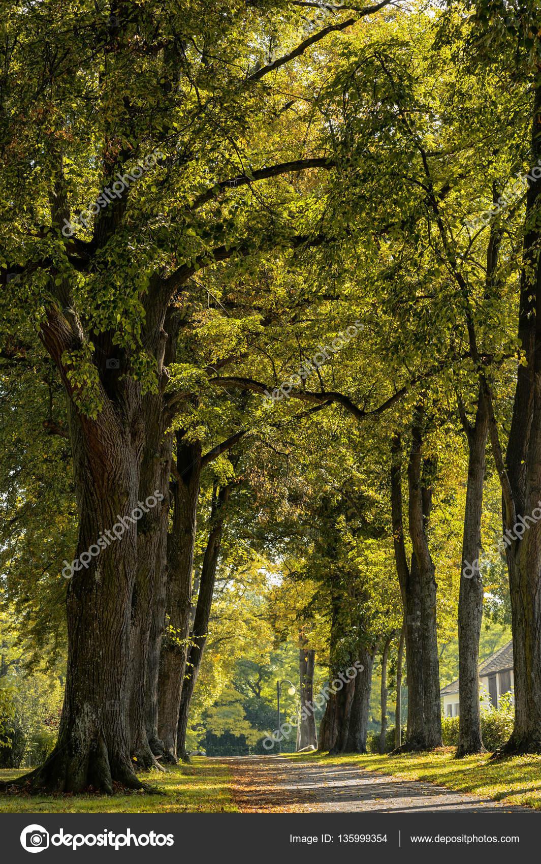 Trees Forests Austria Stock Photo C 01010011portfoliolab 135999354