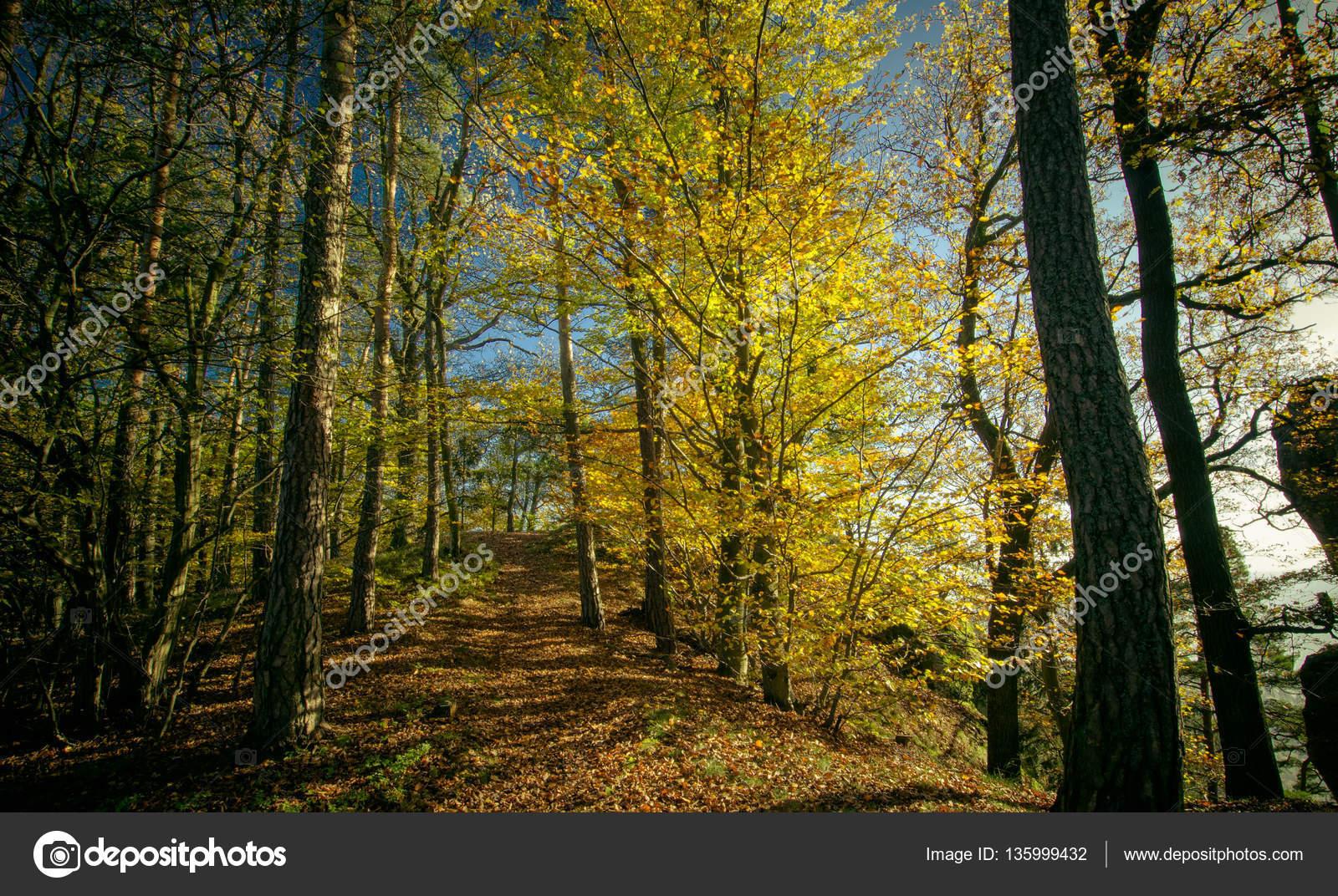 Trees Forests Austria Stock Photo C 01010011portfoliolab 135999432
