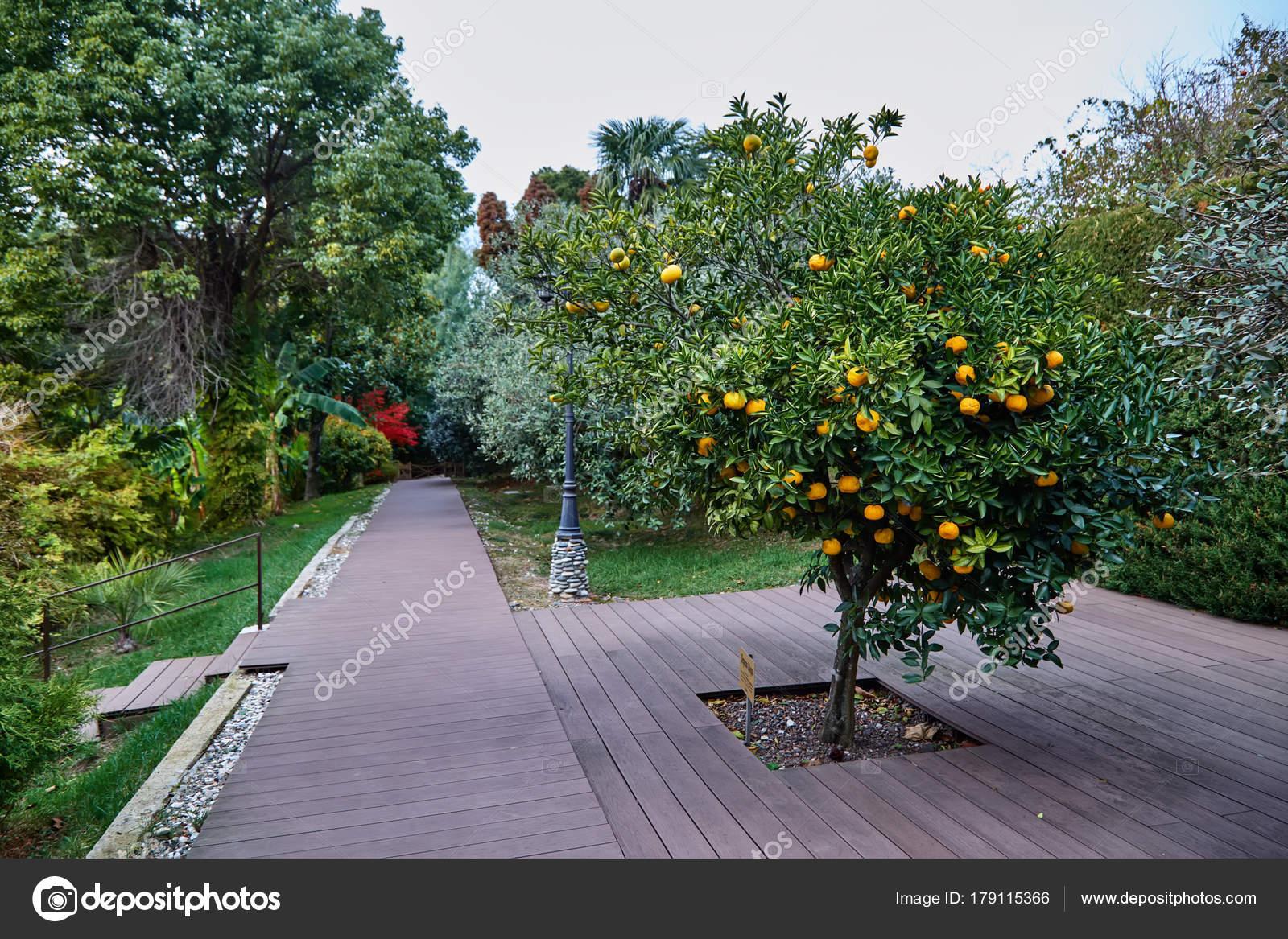 Sochi Garden Museum Tree Friendship U2014 Stock Photo