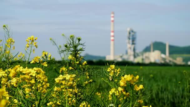 Řepky olejné řepky květy - detailní, továrna na pozadí