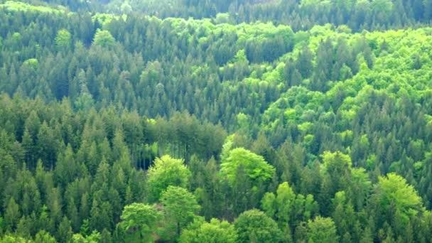 Velké a tlusté lesní oblast - pohled shora