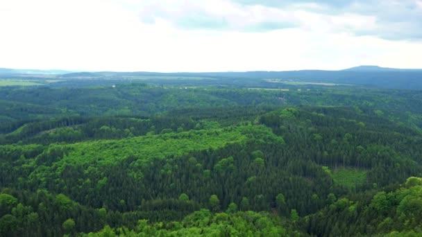 ein dichtes, ausgedehntes Waldgebiet, im Hintergrund der helle Himmel - Draufsicht