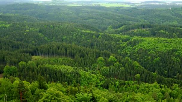 Obrovské, silné lesní oblast - pohled shora