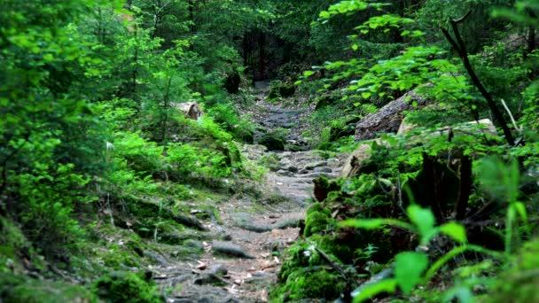 S příznakem cesta v lese