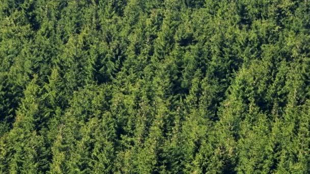 Fa koronát, a sűrű erdő - felülnézet