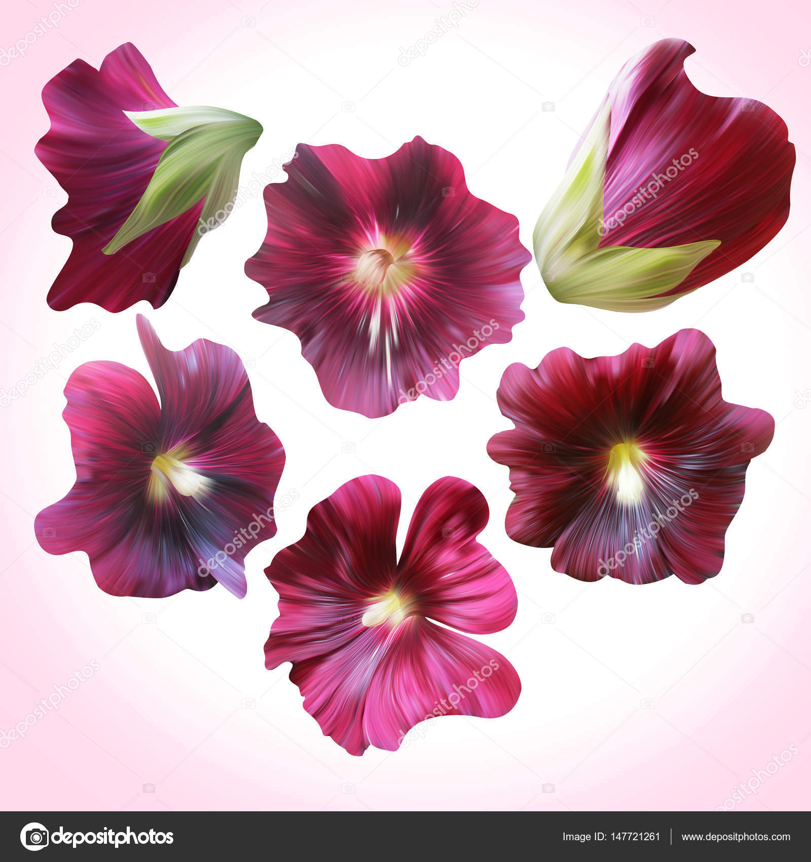 Pink Mallow Flowers Stock Photo Lovekay 147721261