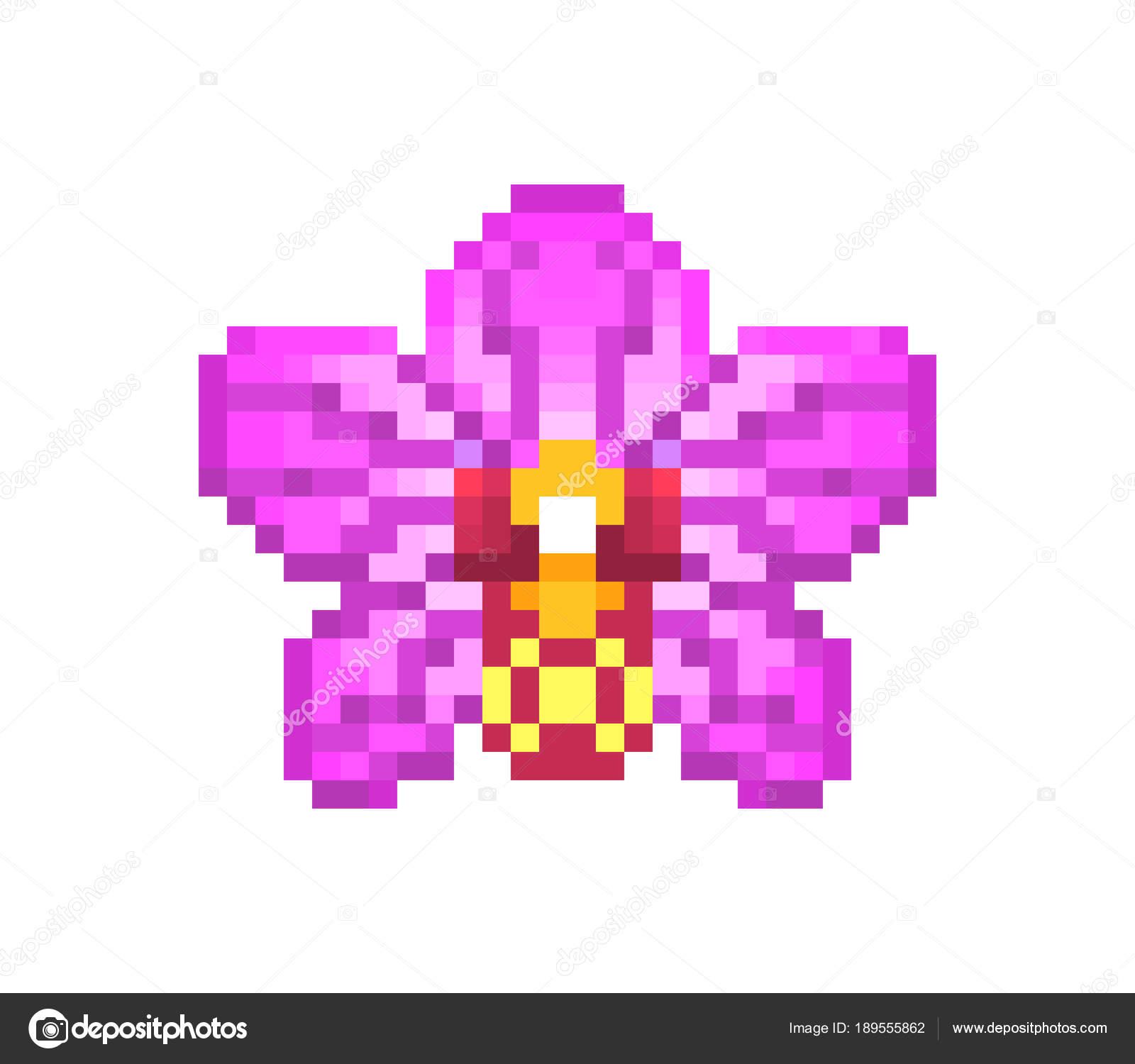 Fleurs Dorchidée Pixel Art Icône Rose Isolé Sur Blanc
