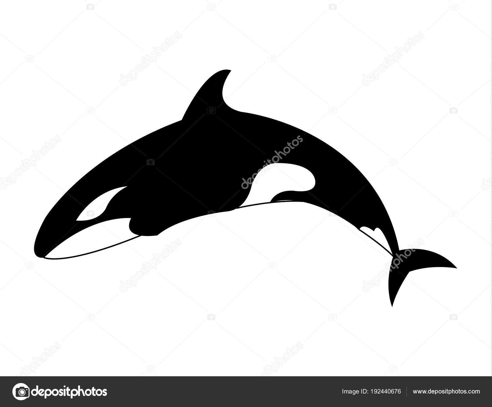 Orca Schwertwal Cartoon Illustration — Stockvektor ...