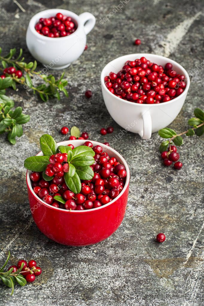 Fresh cranberry or cowberry, lingonberry top view