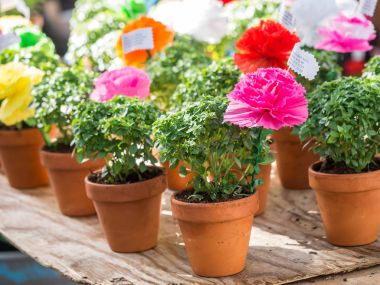 Basil plants with paper flowers and poems sold on Saint Anthony
