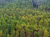Forest Nature Reserve a Pico da Vara Sao Miguel szigeten, Azori.