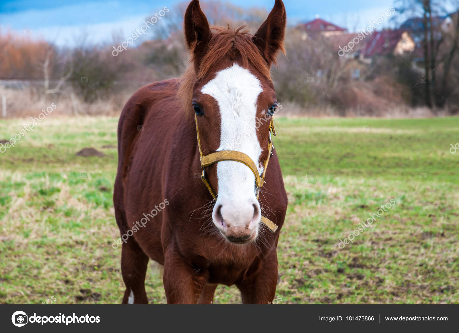 Front view horse grazing meadow stock photo smouker68 181473866 a front view of a horse grazing on a meadow photo by smouker68 sciox Choice Image