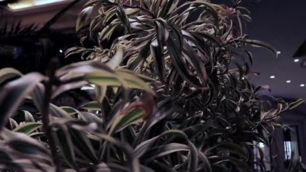 velké listy stromu, palmové listy, detailní záběr