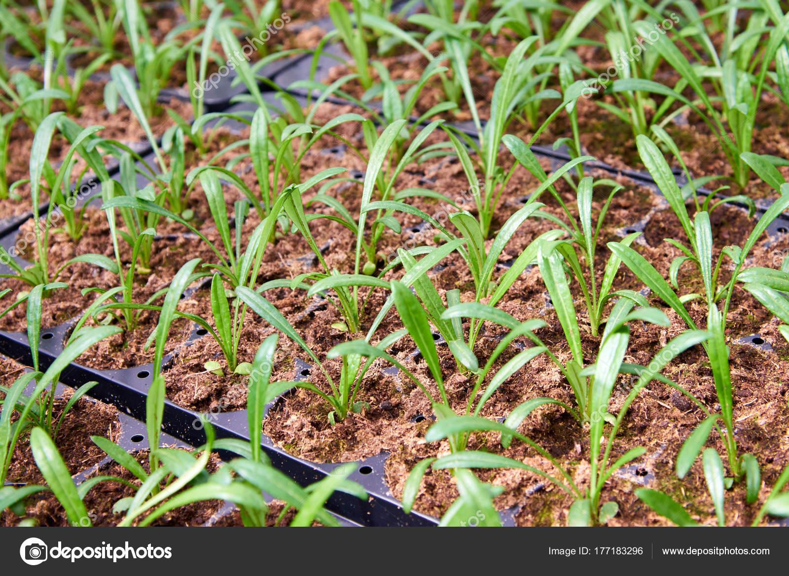 Plantas Para Jardineras Urbanas Jardn Flores Flores Cualquier