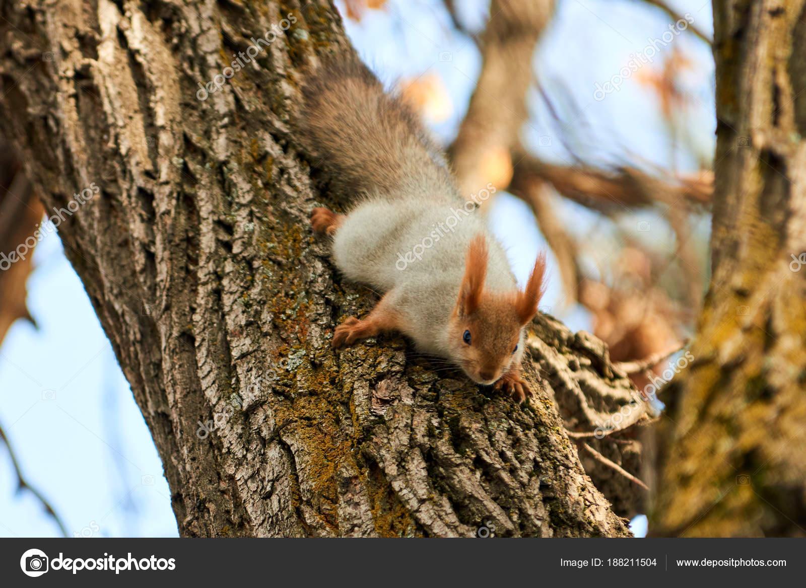 белки на дереве фото