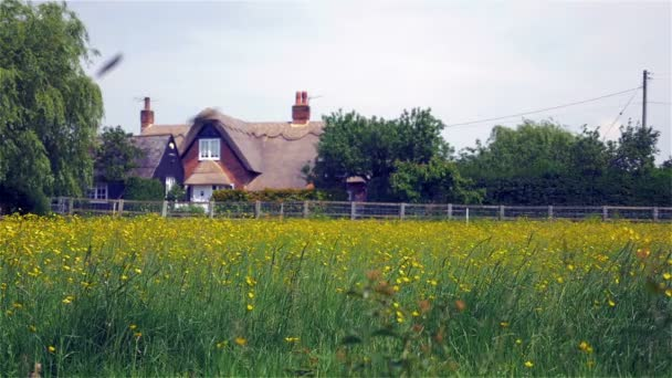 Traditional English thatched cottage rural scene