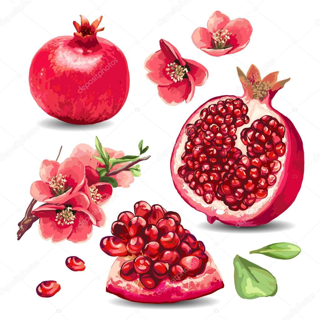 Fruit Pomegranate and pink flowers.