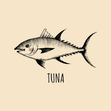 vintage hand-drawn tuna
