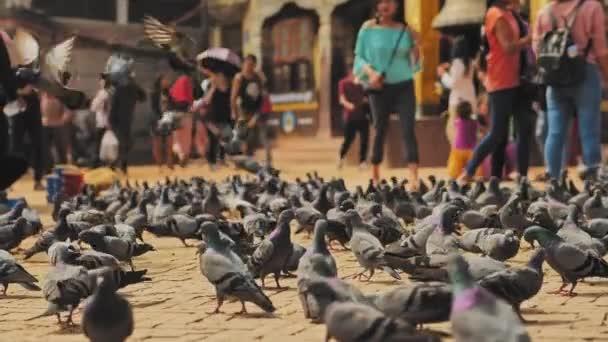 Flock of doves on paved square among walking people on Kathmandu street, Nepal