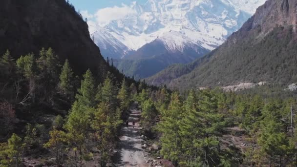 Forest trekking path under Annapurna II snow face lead to buddhist Mani wall