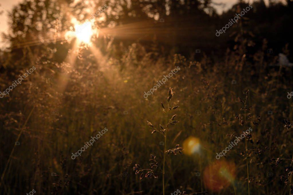 Sunset grass sun nature forest